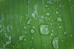 Fresh water drops on leaf in garden Royalty Free Stock Photos