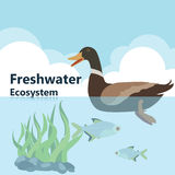 Fresh water ecosystem. Vector illustrations  Eco style life forest Wildlife Forest Royalty Free Stock Image