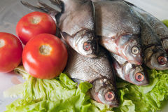 Fresh-water fish Royalty Free Stock Images