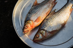 Fresh water fish. In the tray to be sold in the market or supermarket Royalty Free Stock Photos