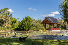 Fresh water lake at Cairns Botanic Gardens, Cairns Region, Queensland, Australia Stock Photos