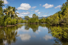 Fresh water lake at Cairns Botanic Gardens, Cairns Region, Queensland, Australia Royalty Free Stock Photography