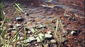 Fresh water lake stock footage