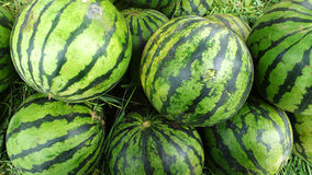 Fresh water melon Royalty Free Stock Images