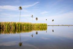 Fresh water oasis Stock Image