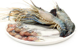 Fresh water Pabda fish with Lobster Royalty Free Stock Photography