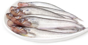 Fresh water Pabda fish Stock Photography