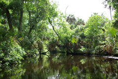 Fresh water pond. A view across a quiet pond or pool created in a jungle-like setting by an underground fresh water spring stock photos