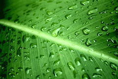 Fresh water rain. On green palm Stock Photos