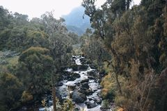 Fresh water river in the mountains, Rwenzori Mountains, Uganda. Fresh water river against a mountain background, Rwenzori Mountains National Park, Kasese royalty free stock images