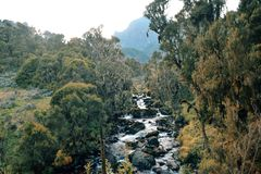 Fresh water river in the mountains, Rwenzori Mountains, Uganda. Fresh water river against a mountain background, Rwenzori Mountains National Park, Kasese stock images