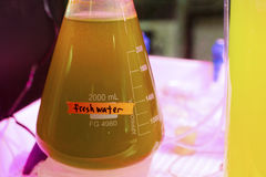 Fresh water sample. A fresh water sample that's not too clean Royalty Free Stock Image