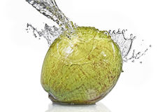 Fresh water splash on coconut isolated on white Stock Photography