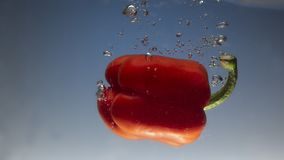 Fresh water splash on red sweet pepper on blue background. Close up stock image