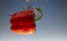 Fresh water splash on red sweet pepper on blue background. Close up royalty free stock images