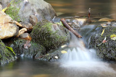 Fresh water spring Royalty Free Stock Images