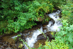 Fresh water spring cascade Stock Images