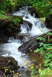 Fresh water spring cascade Royalty Free Stock Photos