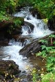 Fresh water spring cascade. A fresh water forest spring cascade Royalty Free Stock Photos