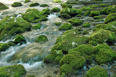 Fresh water stream Stock Photography