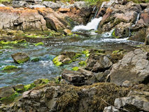 Fresh water stream flowing into salt water. A fresh water stream gushing into salt water with large boulders and rocks covered with algae and seaweed Royalty Free Stock Images