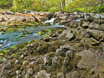 Fresh water stream flowing into salt water. A fresh water stream gushing into salt water with large boulders and rocks covered with algae and seaweed and forest Royalty Free Stock Photo