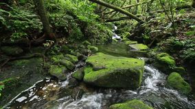 Fresh water stream in tropical rainforest stock footage
