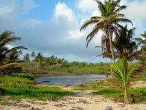 Fresh water swamp big corn island nicaragua Stock Photography