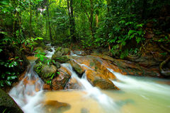 Fresh water in tropical forest Stock Photo