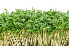 Fresh watercress Stock Photos