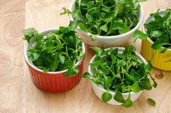 Fresh watercress Stock Images