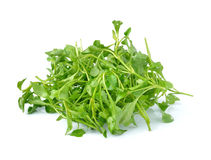 Fresh Watercress isolated on white background royalty free stock photo