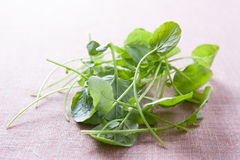 Fresh watercress leaves Royalty Free Stock Photo
