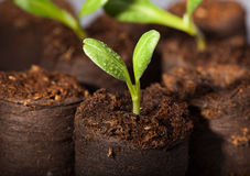 Fresh watered seedlings Stock Photography