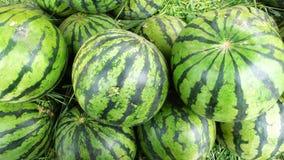 Fresh watermelon Royalty Free Stock Photo