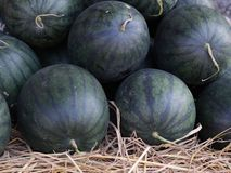 Free Fresh Watermelon. Stock Photo - 22582120