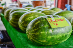 Fresh watermelon for sale at a farmers' market Royalty Free Stock Photography