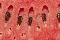 Fresh watermelon with seeds, closeup to seeds royalty free stock photography