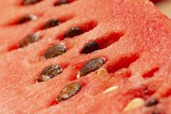 Fresh watermelon with seeds, closeup to seeds royalty free stock photo