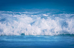 Fresh wave Stock Photography