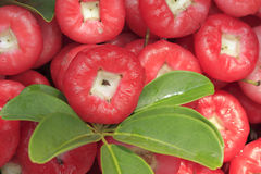Some  fresh wax apple. Fresh wax apple of amoy city,china Royalty Free Stock Images