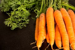 Fresh wet carrots with leaves, on black background.  Royalty Free Stock Photo