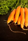 Fresh wet carrots with leaves, on black background.  Stock Photo