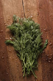 Fresh wet dill from the garden on the old wooden table. Herbs ba. Ckground Stock Images