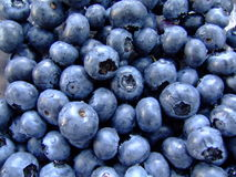 Fresh, Wet, Gleaming Blueberries Stock Photos