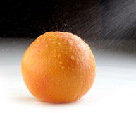 Fresh wet grapefruit Stock Photography