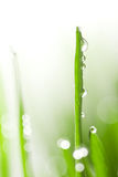 Fresh wet grass background Royalty Free Stock Images