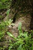 Fresh wet grass after rain Royalty Free Stock Photos