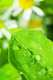 Fresh wet leaf. Fresh leaf after the rain. Nature background Stock Image