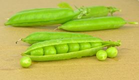Fresh wet peas in a pea pod Stock Photography